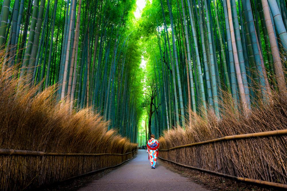 Kyoto, la foresta di Bambù
