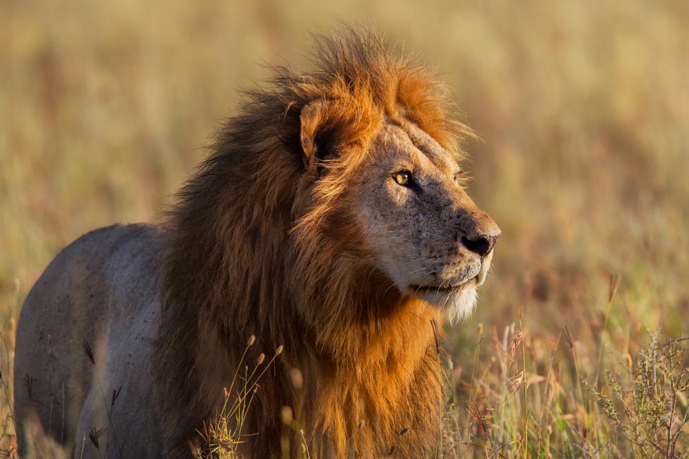 La Tanzania e la sua magnifica fauna