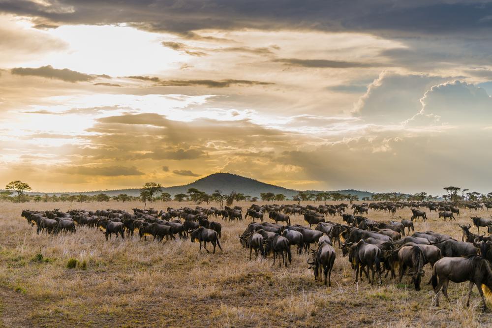 Il parco del Serengeti, Tanzania