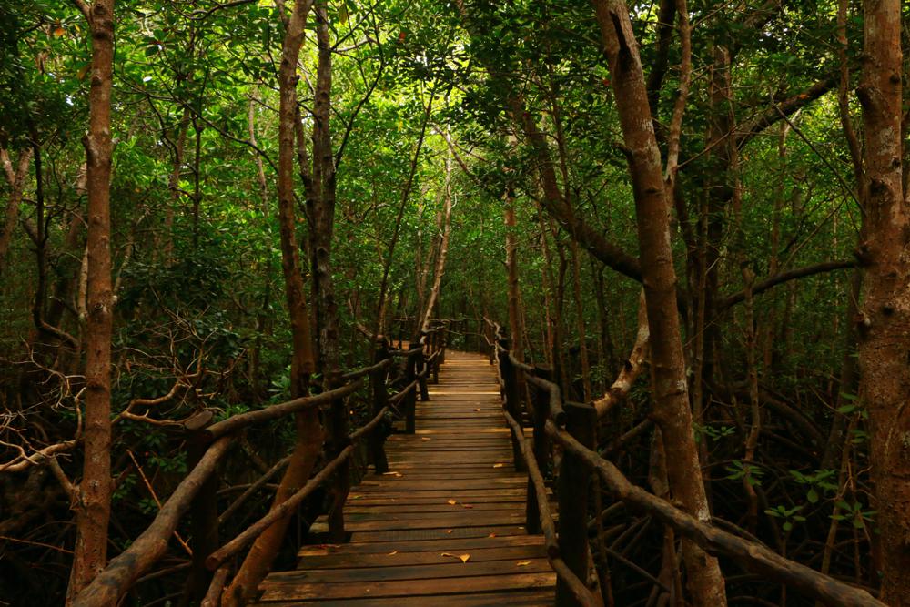 Zanzibar, Jozani Forest