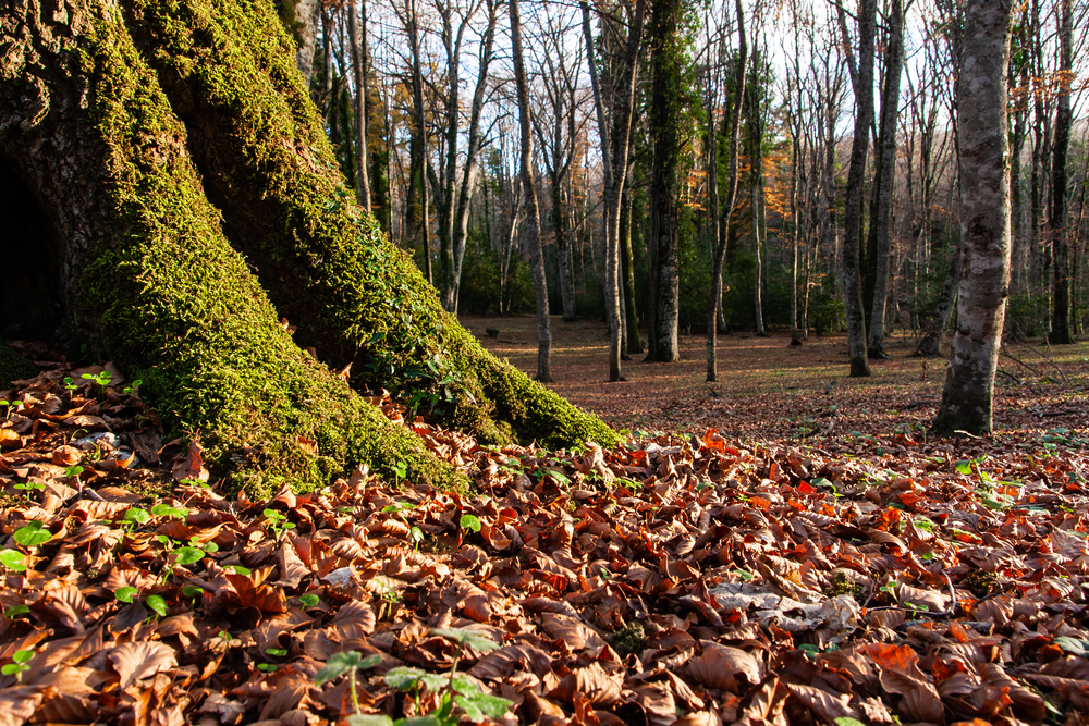 La Foresta Umbra in autunno
